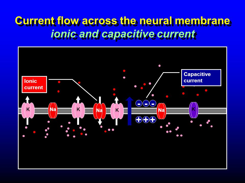 Current flow across the neural membrane ionic and capacitive current KKNa K K Ionic current Capacitive current ++ --- +