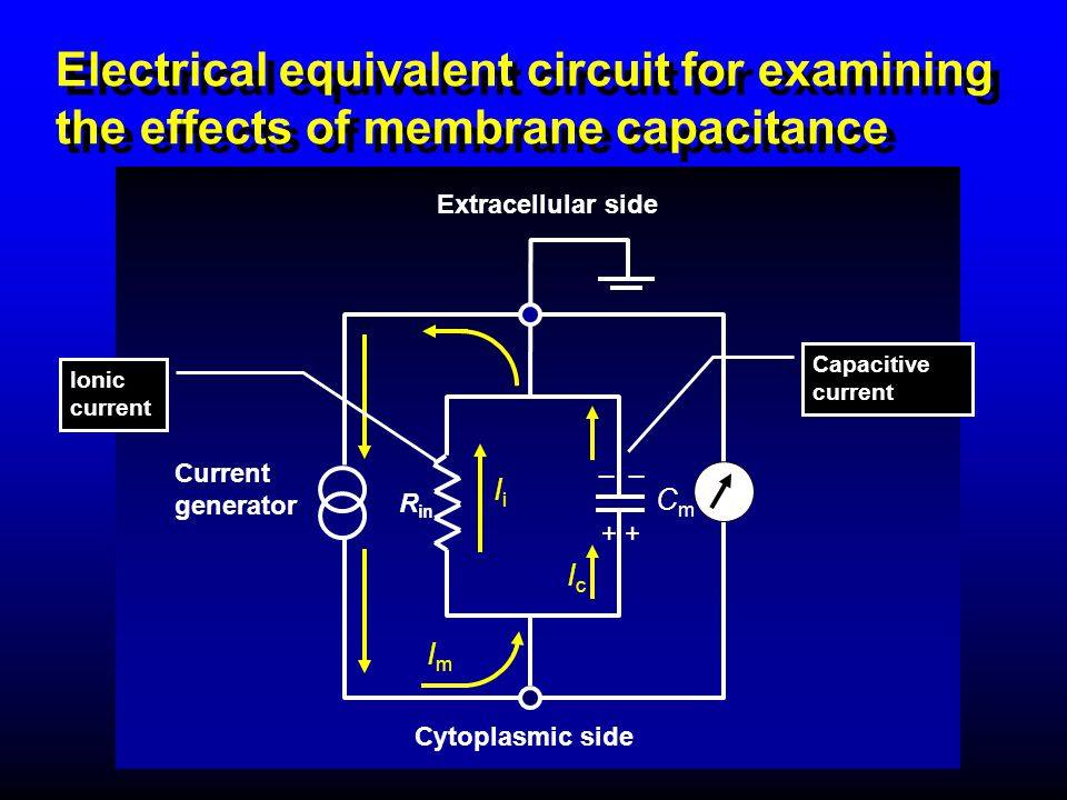 Electrical equivalent circuit for examining the effects of membrane capacitance R in _ Current generator Cytoplasmic side Extracellular side + CmCm Im