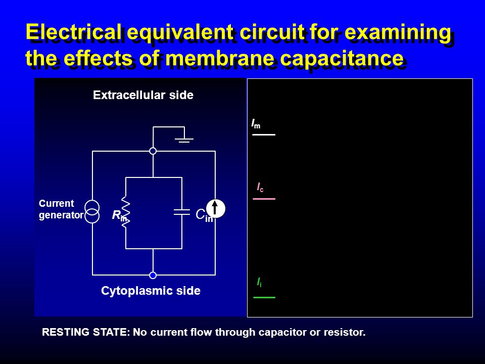 Electrical equivalent circuit for examining the effects of membrane capacitance Extracellular side R in Current generator Cytoplasmic side C in RESTIN