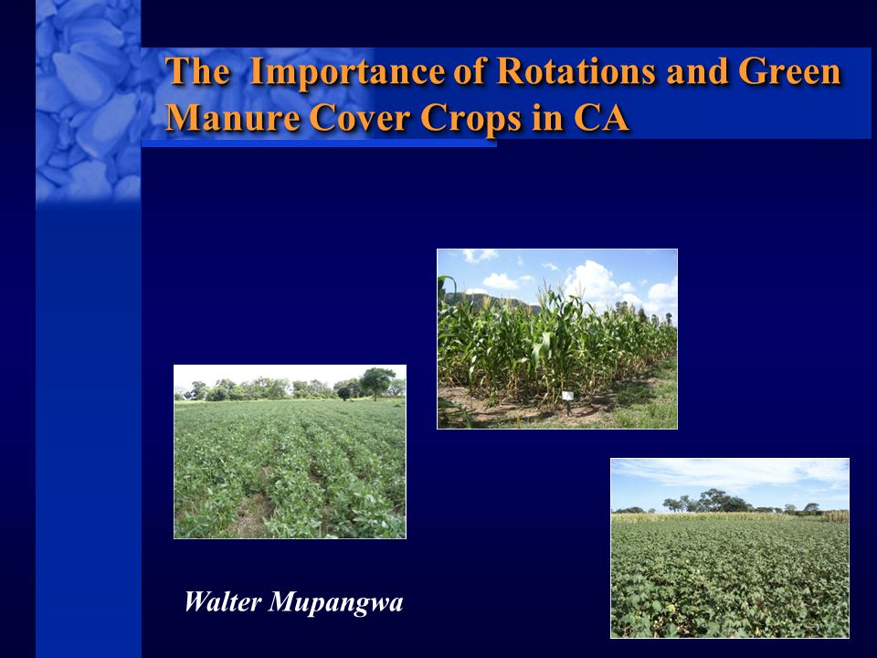 C I M M Y T MR International Maize and Wheat Improvement Center The Importance of Rotations and Green Manure Cover Crops in CA Walter Mupangwa