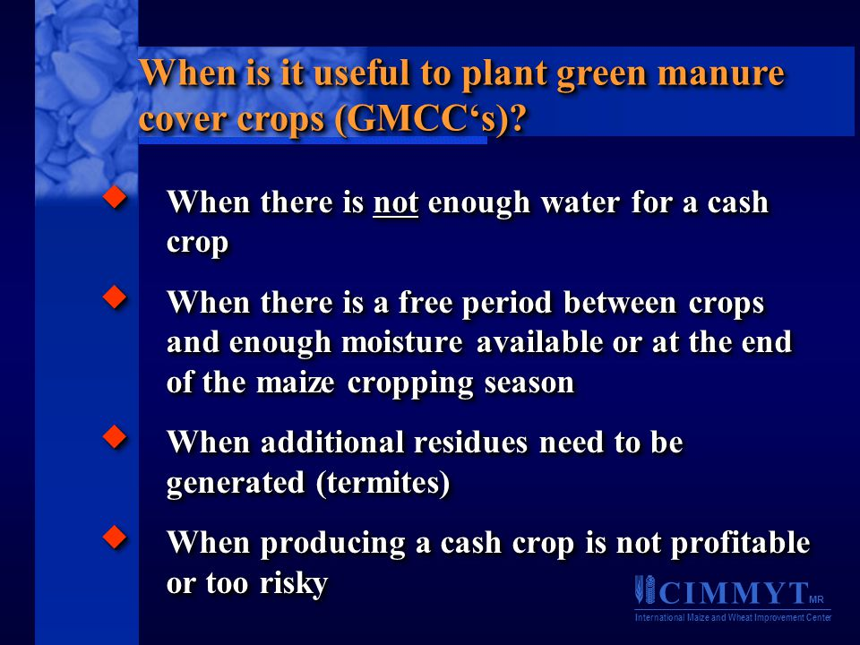 C I M M Y T MR International Maize and Wheat Improvement Center  When there is not enough water for a cash crop  When there is a free period between crops and enough moisture available or at the end of the maize cropping season  When additional residues need to be generated (termites)  When producing a cash crop is not profitable or too risky  When there is not enough water for a cash crop  When there is a free period between crops and enough moisture available or at the end of the maize cropping season  When additional residues need to be generated (termites)  When producing a cash crop is not profitable or too risky When is it useful to plant green manure cover crops (GMCC's)