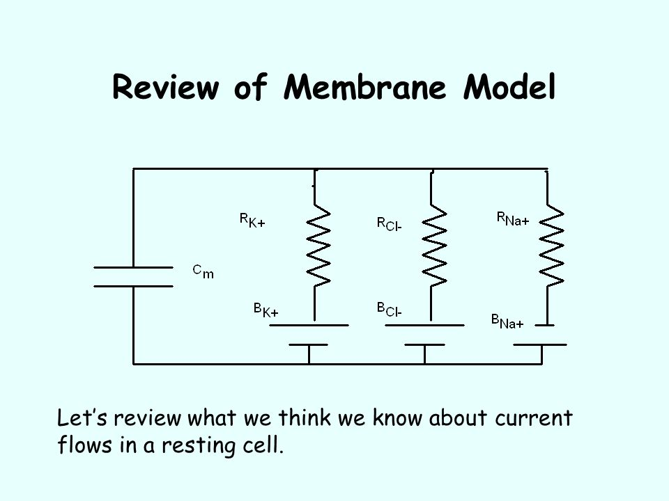 Review of Membrane Model Let's review what we think we know about current flows in a resting cell.