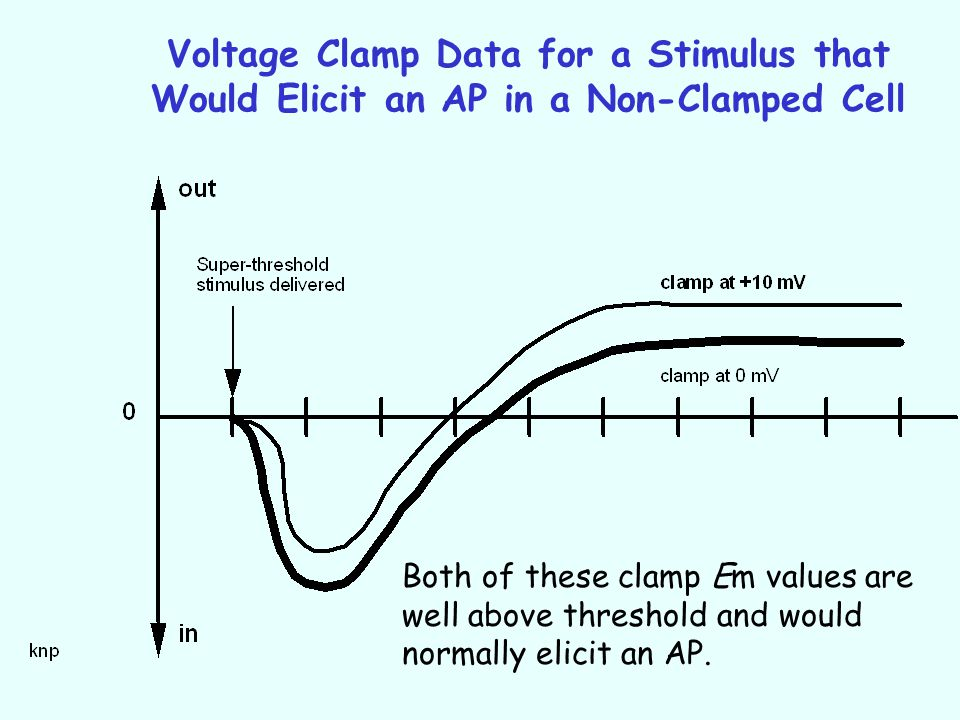 Voltage Clamp Data for a Stimulus that Would Elicit an AP in a Non-Clamped Cell Both of these clamp Em values are well above threshold and would norma