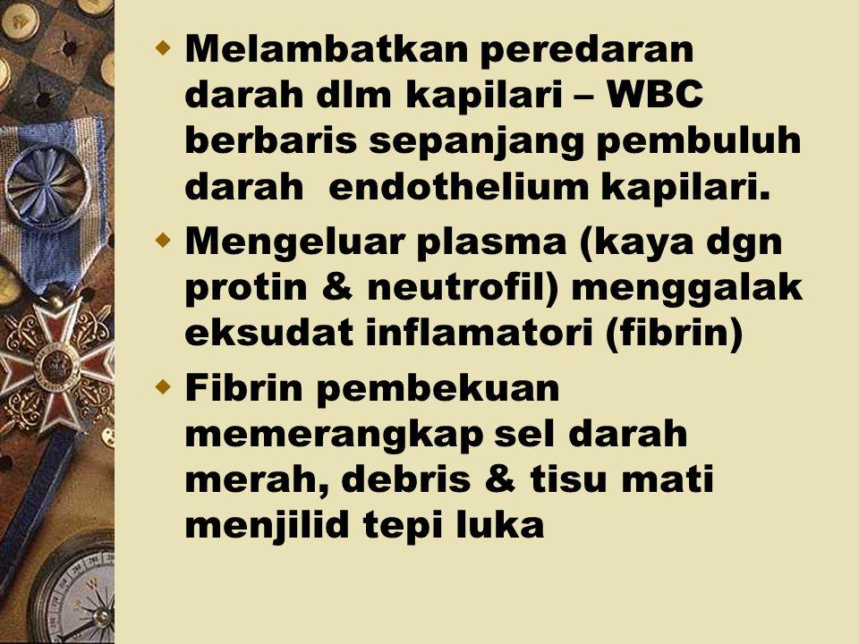 – Permukaan penutup haemostatik membentuk keropeng. – Pembekuan berlebihan @ lapisan dalam luka – melengah penyembuhan 2. FASA INFLAMASI * Berlaku 24