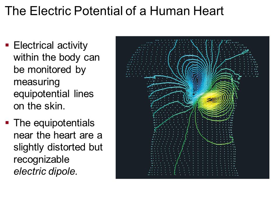 The Electric Potential of a Human Heart  Electrical activity within the body can be monitored by measuring equipotential lines on the skin.