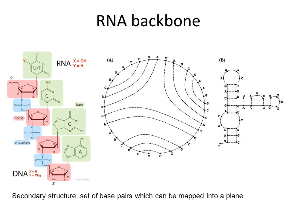 RNA backbone Secondary structure: set of base pairs which can be mapped into a plane