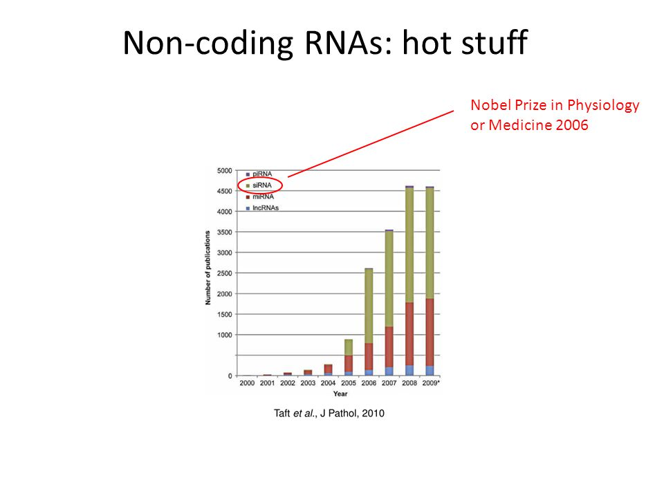 Non-coding RNAs: hot stuff Nobel Prize in Physiology or Medicine 2006