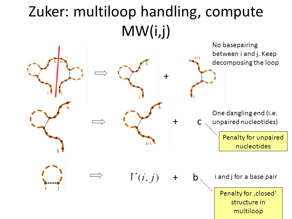 Zuker: multiloop handling, compute MW(i,j) + No basepairing between i and j. Keep decomposing the loop +c One dangling end (i.e. unpaired nucleotides)