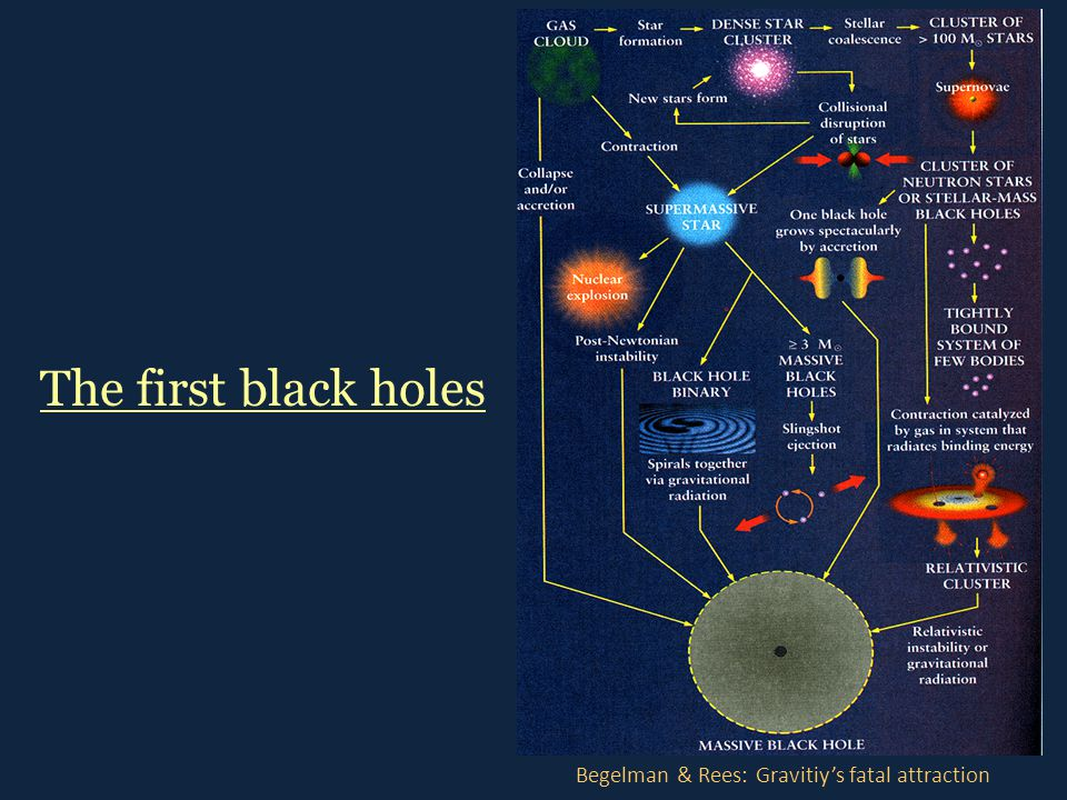 The first black holes Begelman & Rees: Gravitiy's fatal attraction