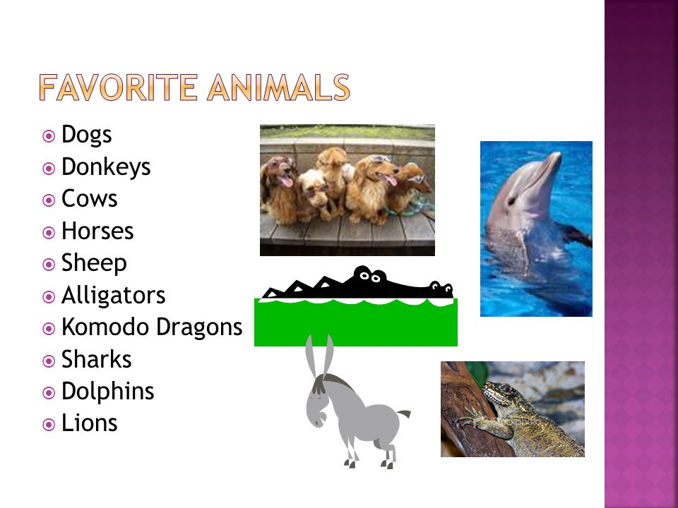  Dogs  Donkeys  Cows  Horses  Sheep  Alligators  Komodo Dragons  Sharks  Dolphins  Lions