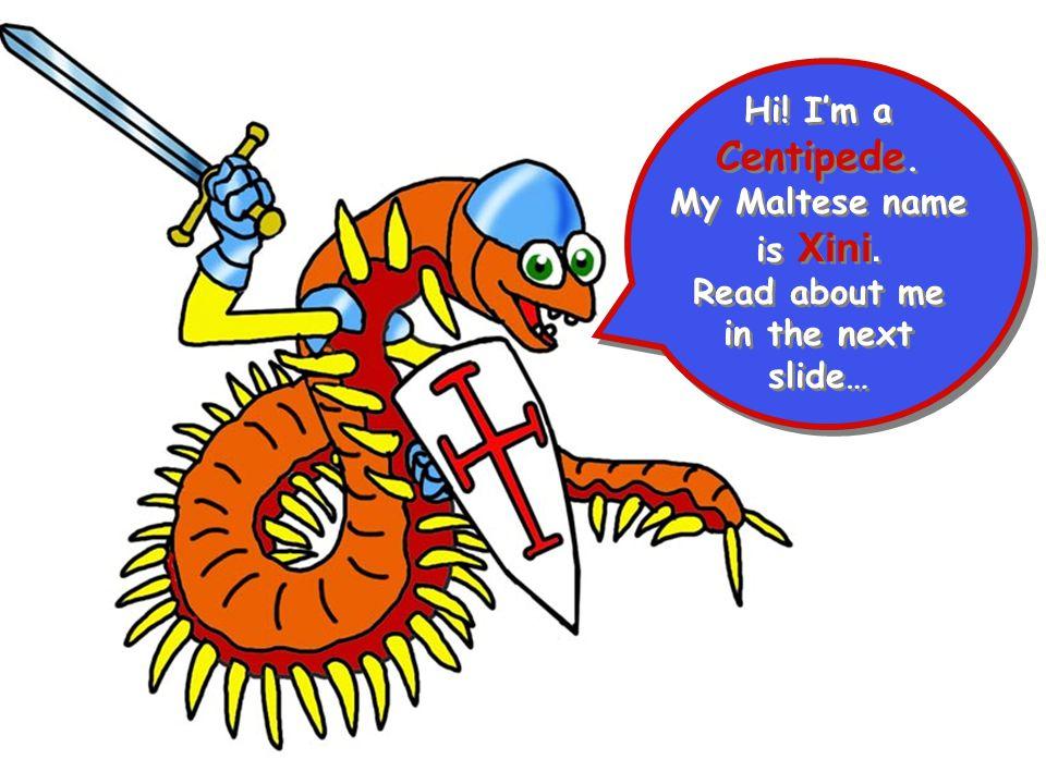 Hi! I'm a Centipede. My Maltese name is Xini. Read about me in the next slide… Hi! I'm a Centipede. My Maltese name is Xini. Read about me in the next