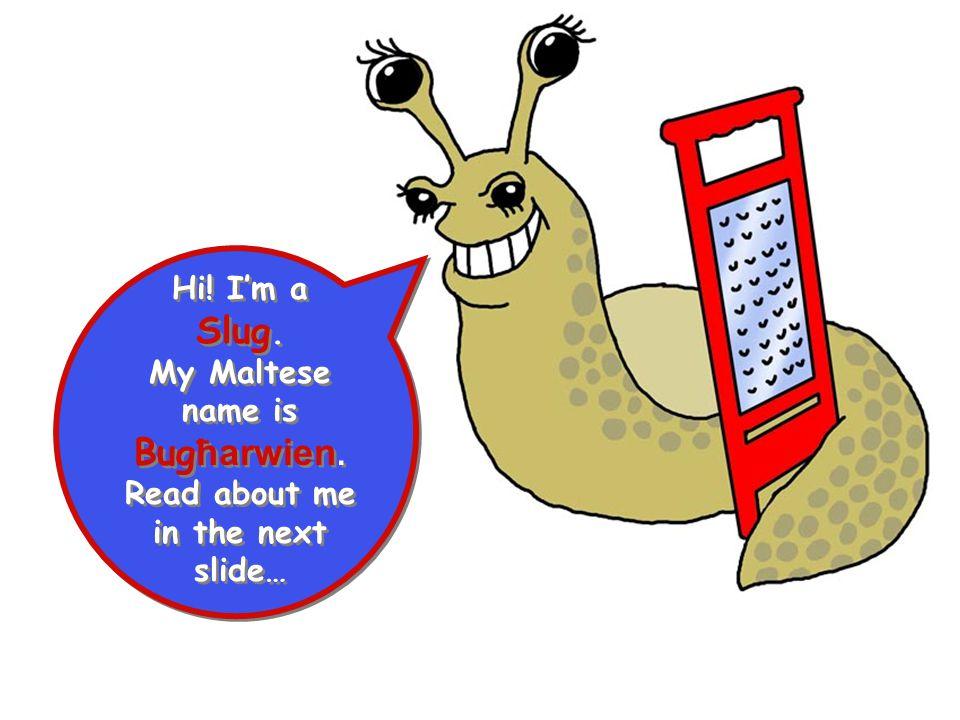 Hi! I'm a Slug. My Maltese name is Bug ħarwien. Read about me in the next slide… Hi! I'm a Slug. My Maltese name is Bug ħarwien. Read about me in the
