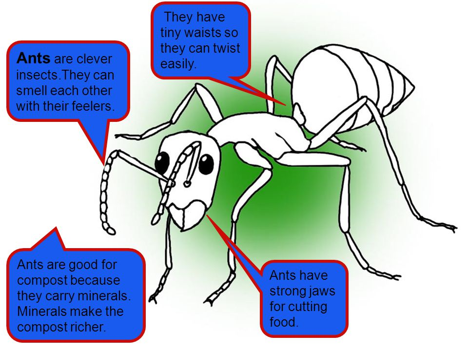 Ants are good for compost because they carry minerals. Minerals make the compost richer. Ants are clever insects.They can smell each other with their
