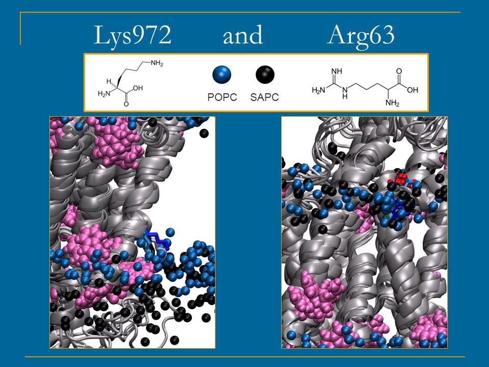 Lys972 and Arg63 POPC SAPC