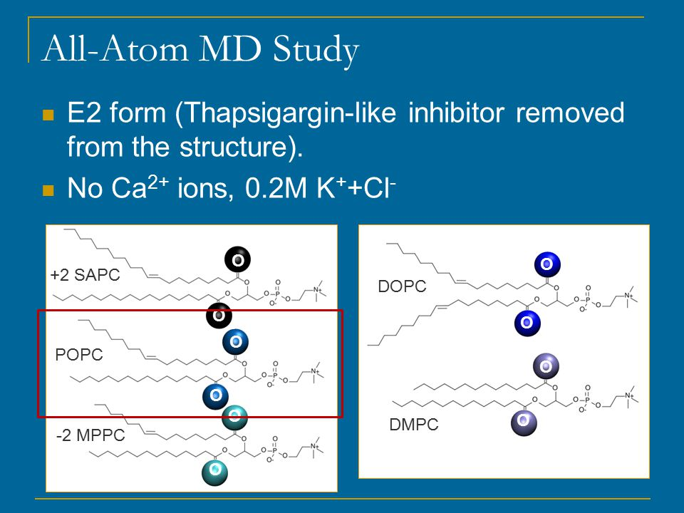 All-Atom MD Study POPC E2 form (Thapsigargin-like inhibitor removed from the structure).