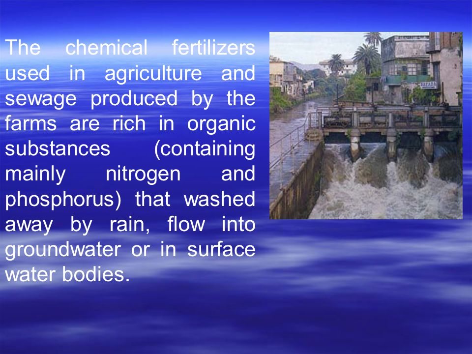 The chemical fertilizers used in agriculture and sewage produced by the farms are rich in organic substances (containing mainly nitrogen and phosphoru