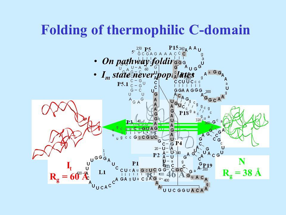 Folding of thermophilic C-domain I m R g = 46 Å N R g = 38 Å I m state never populates I m state never populates I t R g = 60 Å On pathway folding On pathway folding