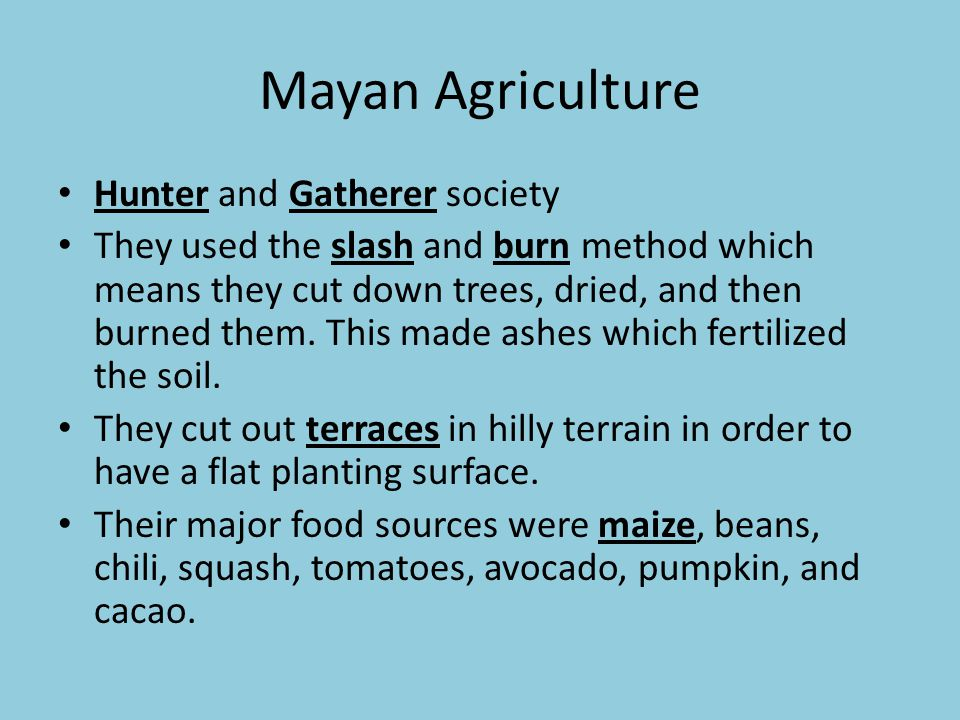 Mayan Agriculture Hunter and Gatherer society They used the slash and burn method which means they cut down trees, dried, and then burned them. This m