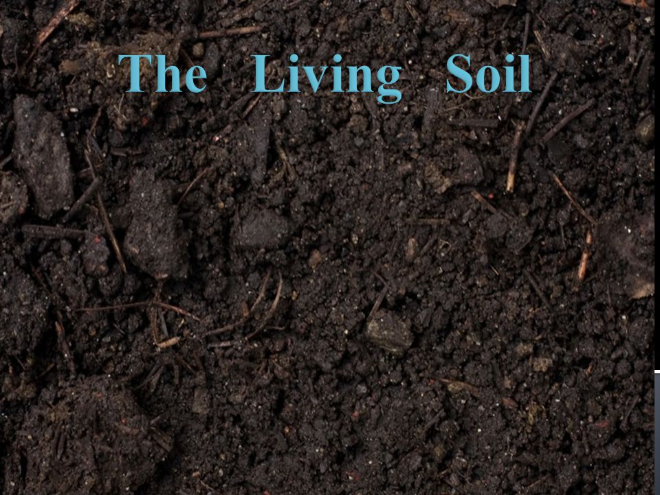 The Living Soil Hello, my name is Harry the earthworm.