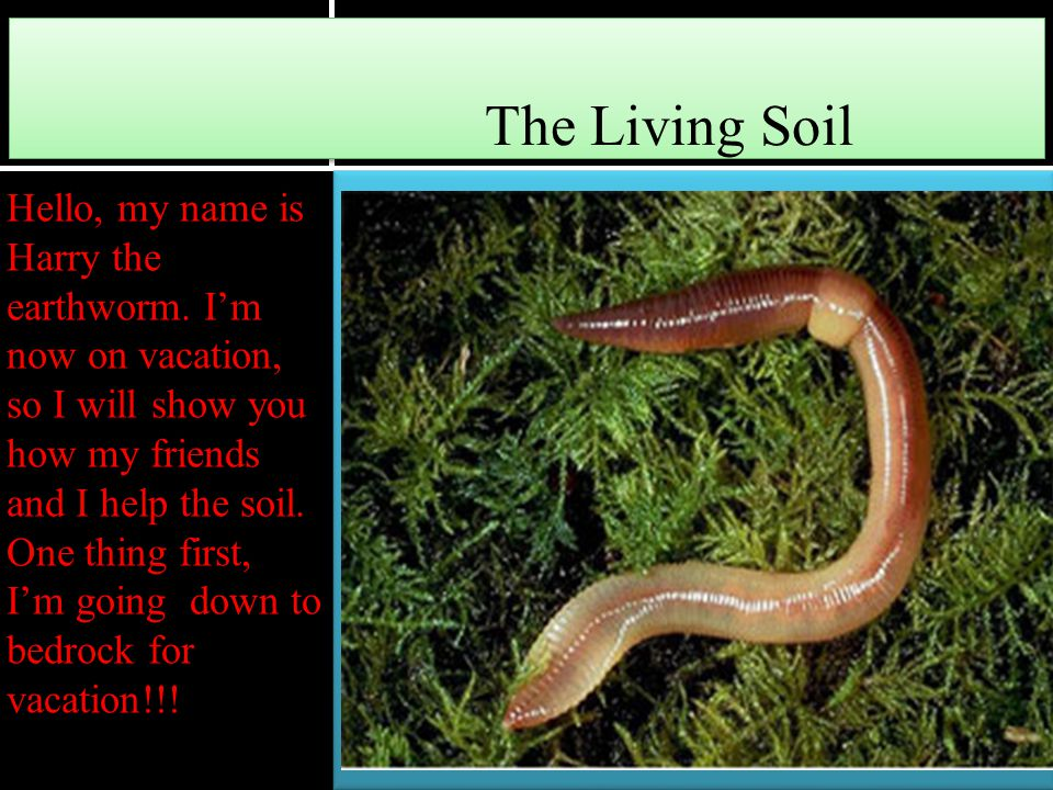The Living Soil Hello, my name is Harry the earthworm. I'm now on vacation, so I will show you how my friends and I help the soil. One thing first, I'