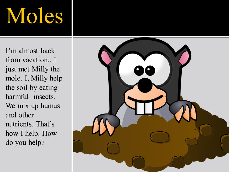 Moles I'm almost back from vacation.. I just met Milly the mole.