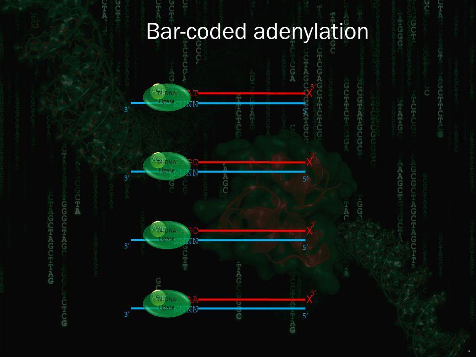 Bar-coded adenylation 3' GCGC X 5' PO 4 CCAA X 5' PO 4 3' TAGC X 5' PO 4 3' ATAT X 5' PO 4 3' NNNN 5' 3' NNNN 5' 3' NNNN 5' 3' NNNN 5' 3' App T4 DNA L