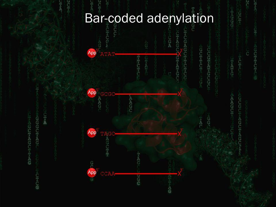Bar-coded adenylation 3' GCGC X 5' CCAA X 5'3' TAGC X 5'3' ATAT X 5'3' App