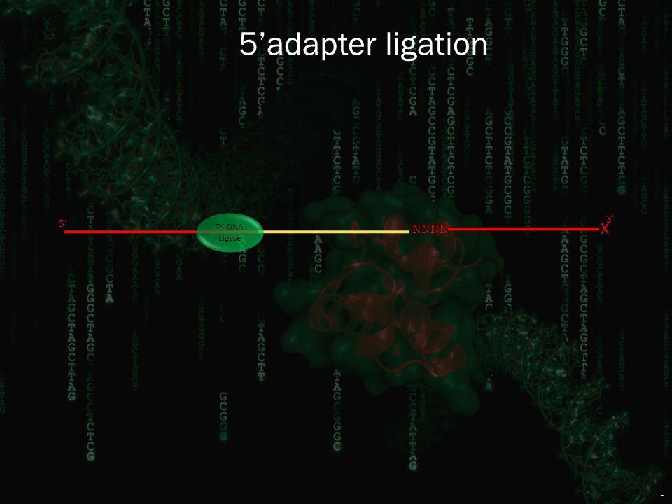 5'adapter ligation 3' NNNN X 5' T4 DNA Ligase.