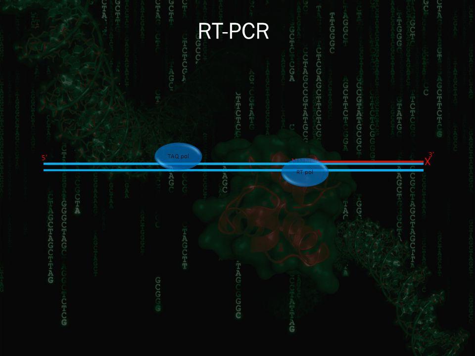 RT-PCR 3' NNNN X 5' RT pol TAQ pol