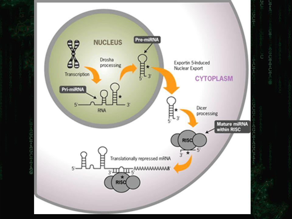 How to clone miRNAs? X 3' 3'-OH5' PO 4 5' PO 4 5' PO 4 + X 3' + T4 RNA ligase ATP