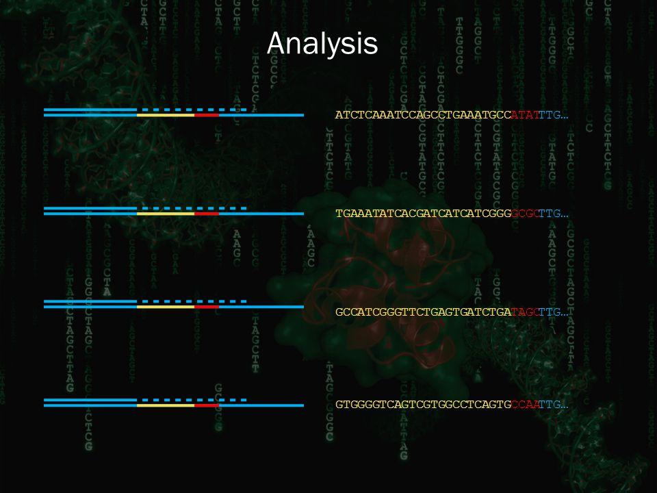 TGAATCACGGCGCAATTTG…ATC GGGATC GCCGGGTAGCTTCATCTTG…TGAGTGATCTGA ATCAATATATTTG…CCATCAGCCAATTGAGCC TCAGTGCCAAGTCGGGTTG…GTGTCAGCCGTG Analysis