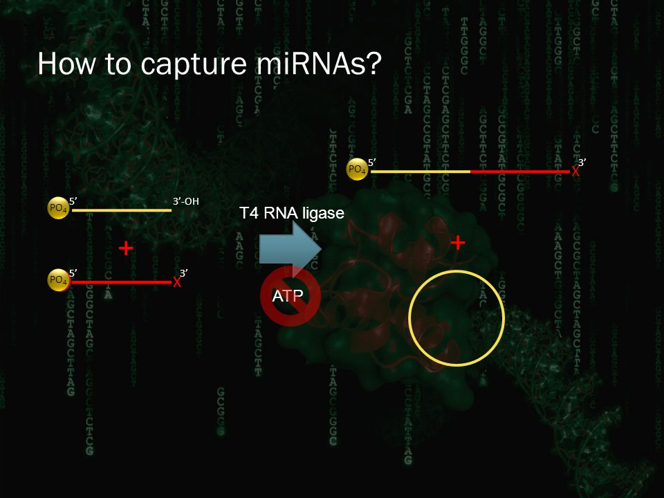 How to capture miRNAs? X 3' 3'-OH5' PO 4 5' App 5' PO 4 + X 3' + T4 RNA ligase ATP X 3'5' PO 4
