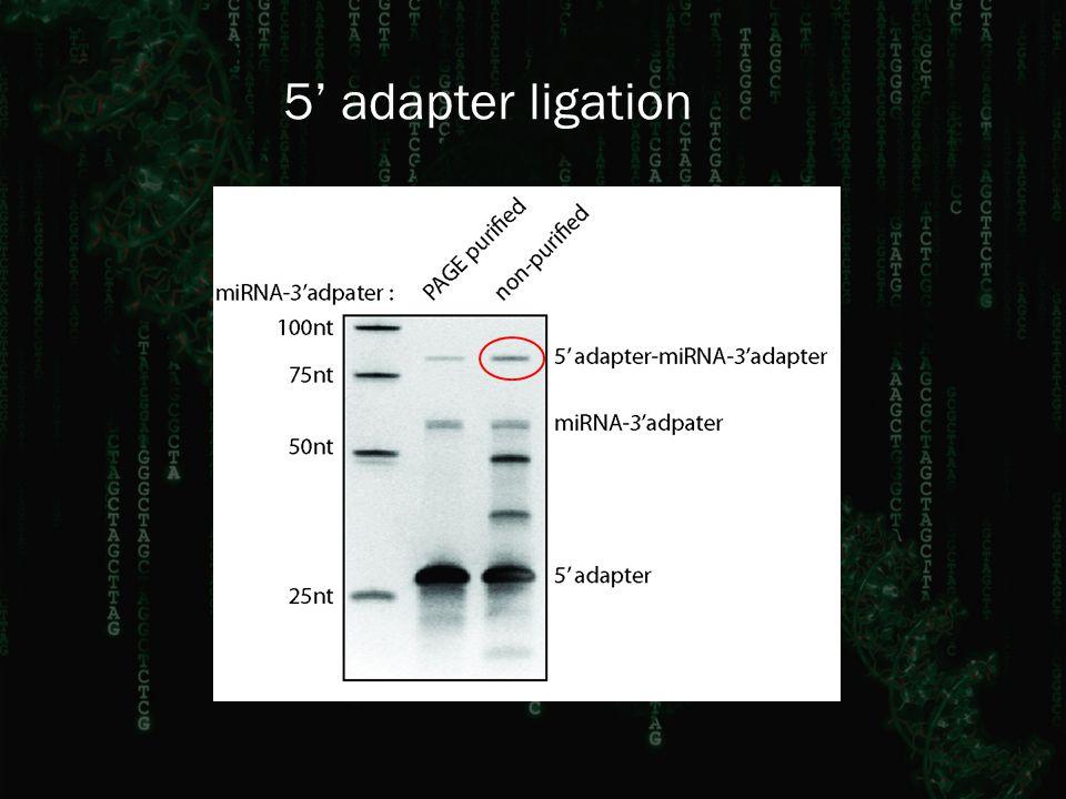 5' adapter ligation