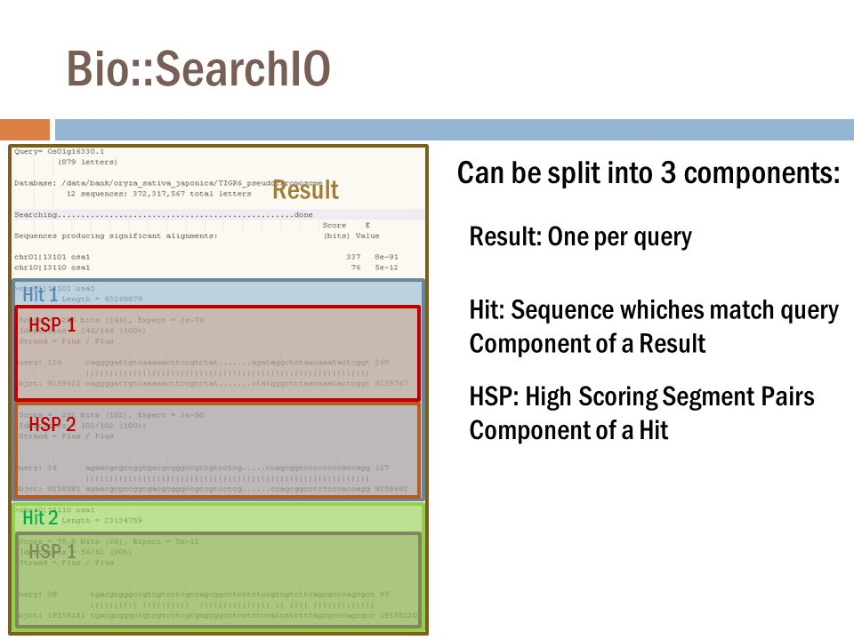 Bio::SearchIO Can be split into 3 components: Result: One per query Hit: Sequence whiches match query Component of a Result Result HSP: High Scoring Segment Pairs Component of a Hit Hit 1 Hit 2 HSP 1 HSP 2 HSP 1