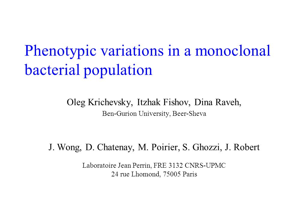 Phenotypic variations in a monoclonal bacterial population Oleg Krichevsky, Itzhak Fishov, Dina Raveh, Ben-Gurion University, Beer-Sheva J. Wong, D. C