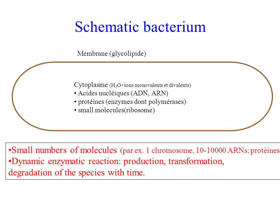 Bacterium Biochemistry (simplified!) 2) DNA replication ADNpolymérase, gyrase… transcription translation ADN chromosomeARNm Protéine: un gène 1) Central dogma: ARNpolyméraseribosome
