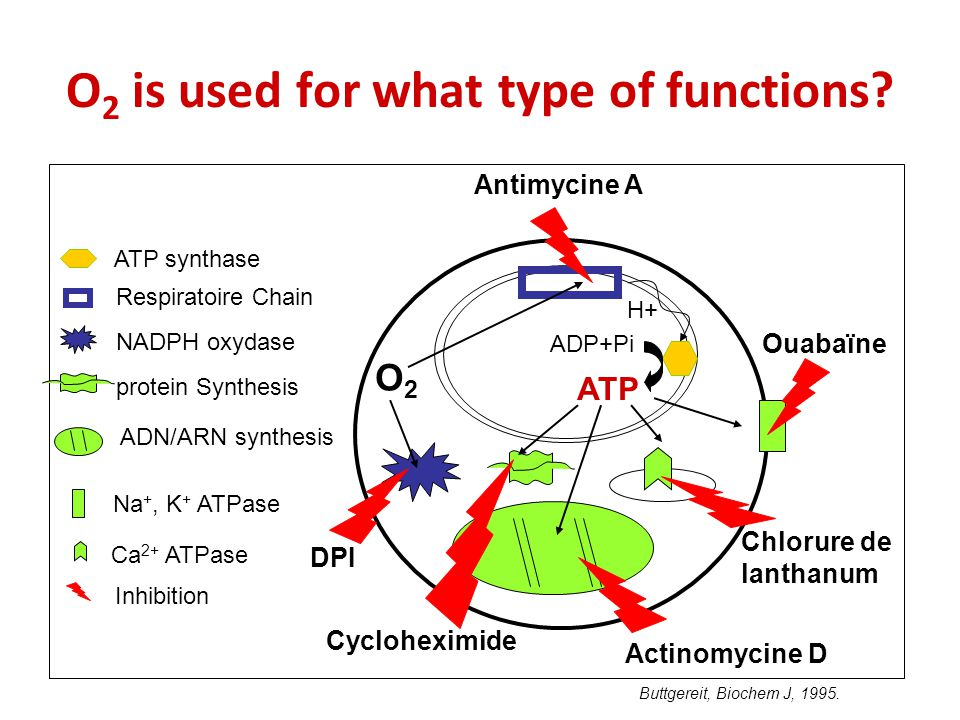 ADN/ARN synthesis O 2 is used for what type of functions.