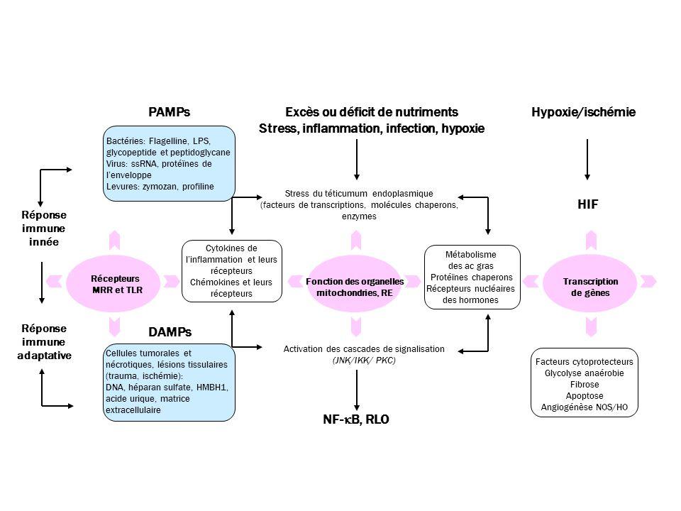 Excès ou déficit de nutriments Stress, inflammation, infection, hypoxie Stress du téticumum endoplasmique (facteurs de transcriptions, molécules chaperons, enzymes Fonction des organelles mitochondries, RE Cytokines de l'inflammation et leurs récepteurs Chémokines et leurs récepteurs Métabolisme des ac gras Protéïnes chaperons Récepteurs nucléaires des hormones Activation des cascades de signalisation (JNK/IKK/ PKC) NF-  B, RLO PAMPs Bactéries: Flagelline, LPS, glycopeptide et peptidoglycane Virus: ssRNA, protéïnes de l'enveloppe Levures: zymozan, profiline DAMPs Cellules tumorales et nécrotiques, lésions tissulaires (trauma, ischémie): DNA, héparan sulfate, HMBH1, acide urique, matrice extracellulaire Récepteurs MRR et TLR Hypoxie/ischémie HIF Facteurs cytoprotecteurs Glycolyse anaérobie Fibrose Apoptose Angiogénèse NOS/HO Transcription de gènes Réponse immune innée Réponse immune adaptative