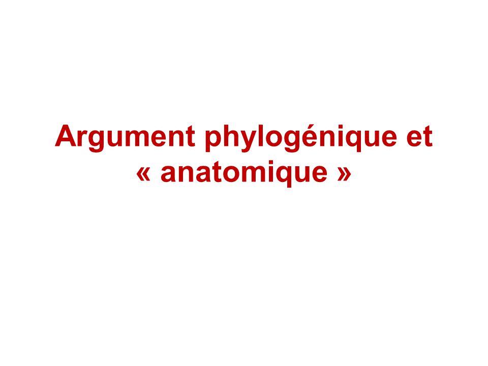 Argument phylogénique et « anatomique »