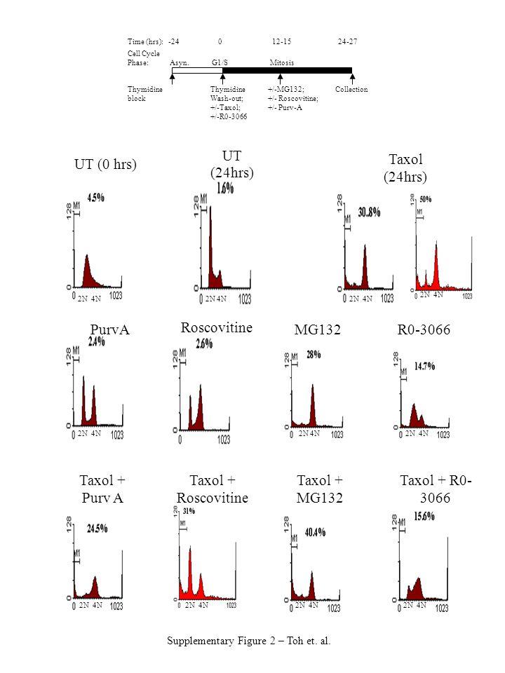 2N 4N Taxol + Purv A Taxol + MG132 Taxol + R0- 3066 PurvAMG132R0-3066 UT (0 hrs) UT (24hrs) Roscovitine Taxol + Roscovitine Thymidine block Thymidine Wash-out; +/-Taxol; +/-R0-3066 +/-MG132; +/- Roscovitine; +/- Purv-A Time (hrs): -24 0 12-15 24-27 Cell Cycle Phase: Asyn.