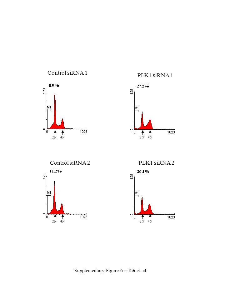 Control siRNA 1 Control siRNA 2 PLK1 siRNA 1 PLK1 siRNA 2 Supplementary Figure 6 – Toh et.