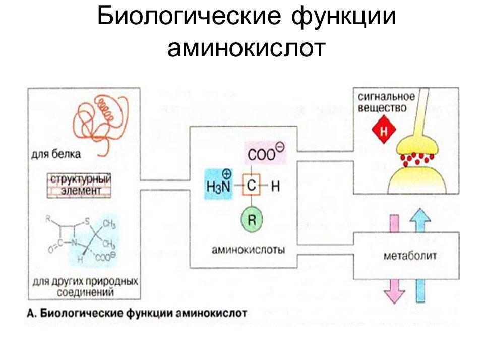 Биологические функции аминокислот