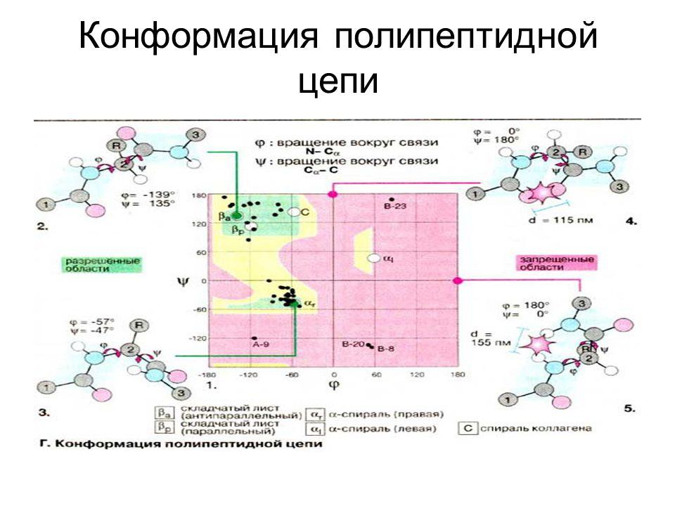 Конформация полипептидной цепи