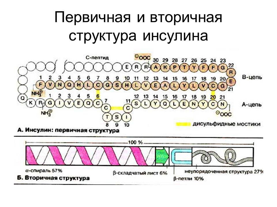 Первичная и вторичная структура инсулина