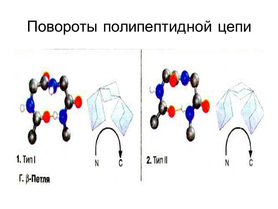 Повороты полипептидной цепи