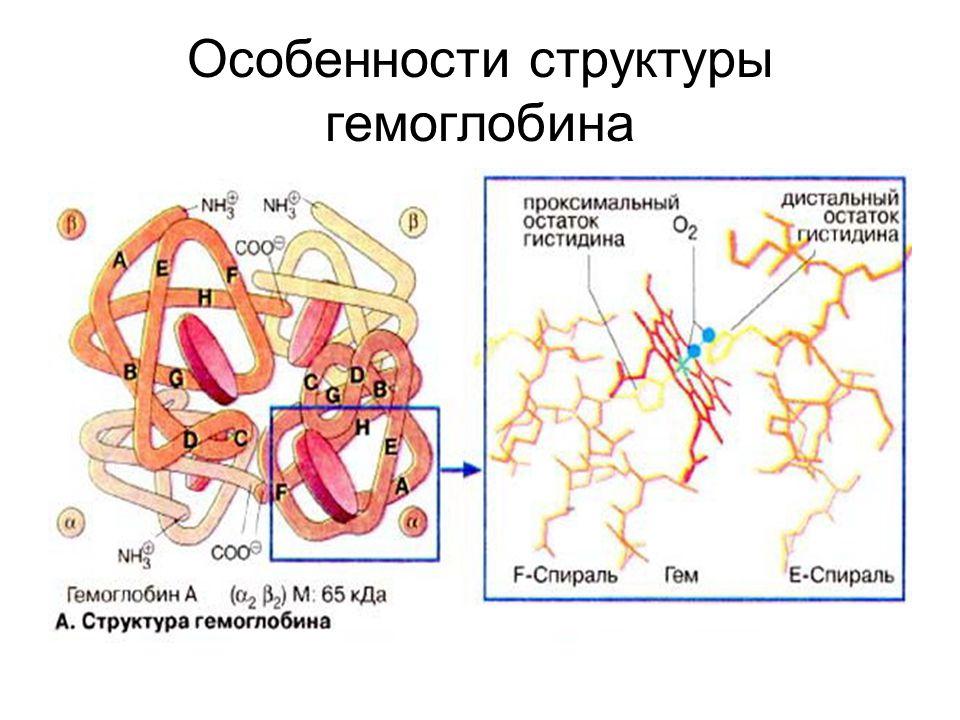 Особенности структуры гемоглобина