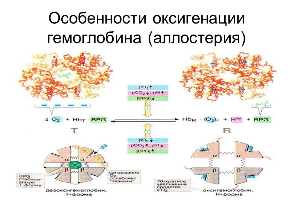 Особенности оксигенации гемоглобина (аллостерия)