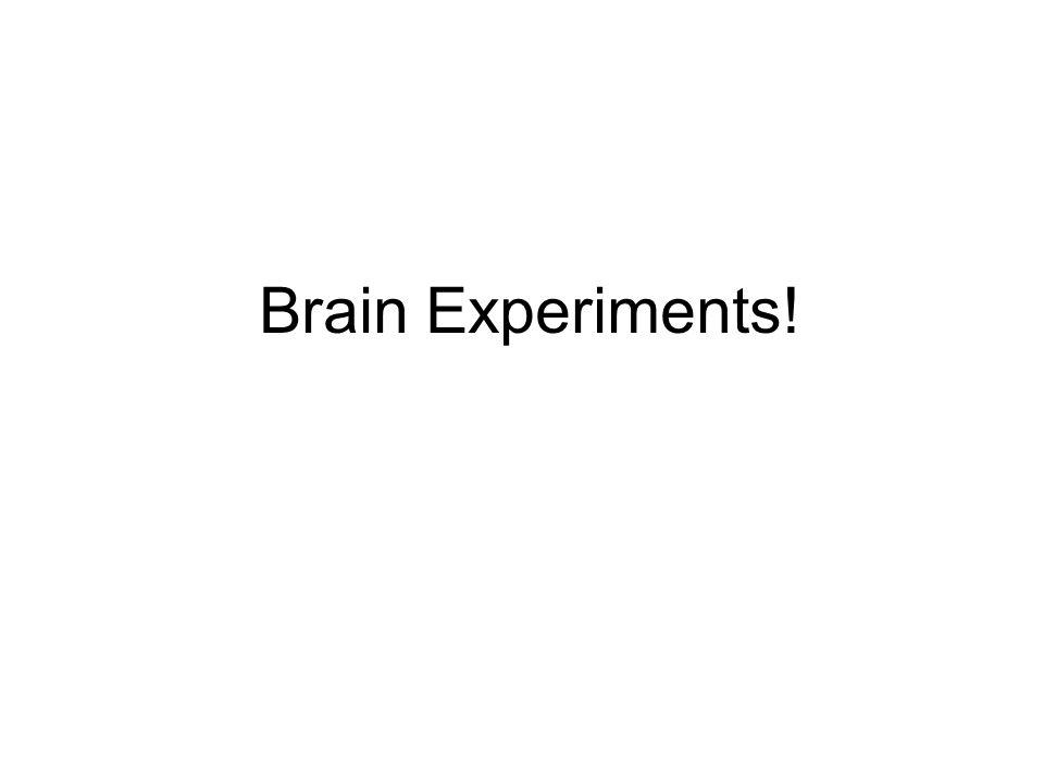 Brain Experiments!