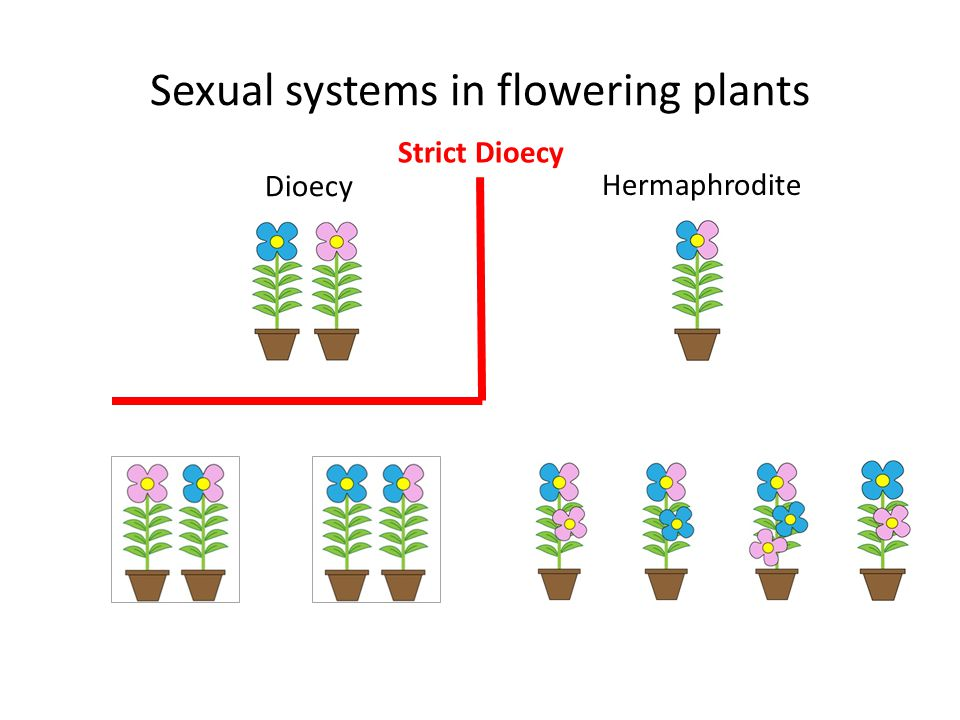 Sexual systems in flowering plants Dioecy Hermaphrodite Strict Dioecy