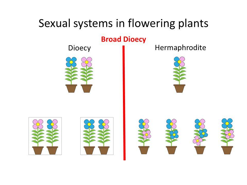 Sexual systems in flowering plants Dioecy Hermaphrodite Broad Dioecy